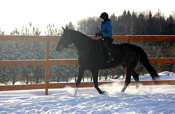 конный клуб в москве недорого